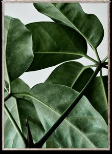 Bilde av Green Home 01 50x70 cm